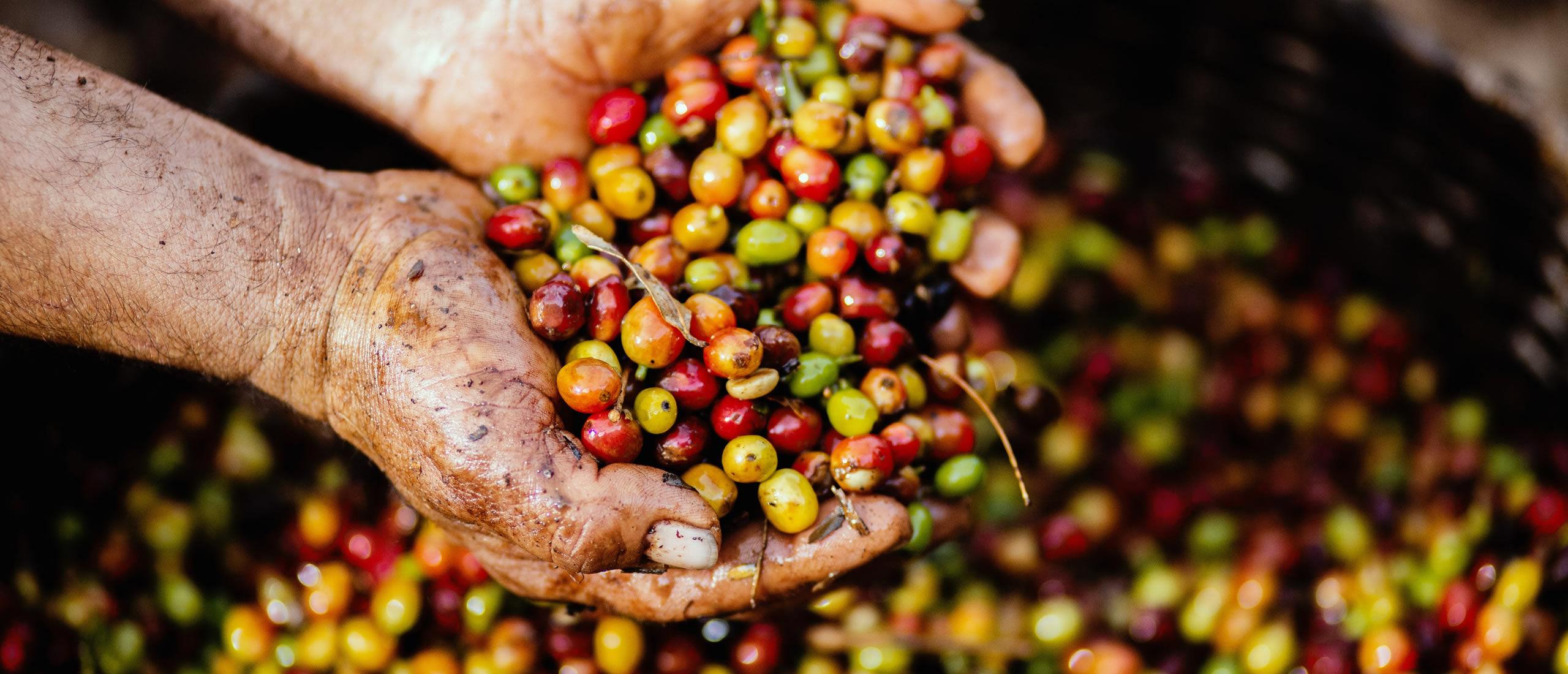 Geschäftsbedingungen - Kaffee Gourmet